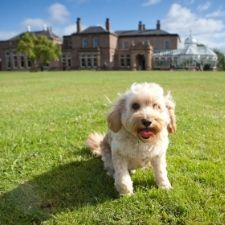 An image of a dog sitting on the lawn in front of the museum
