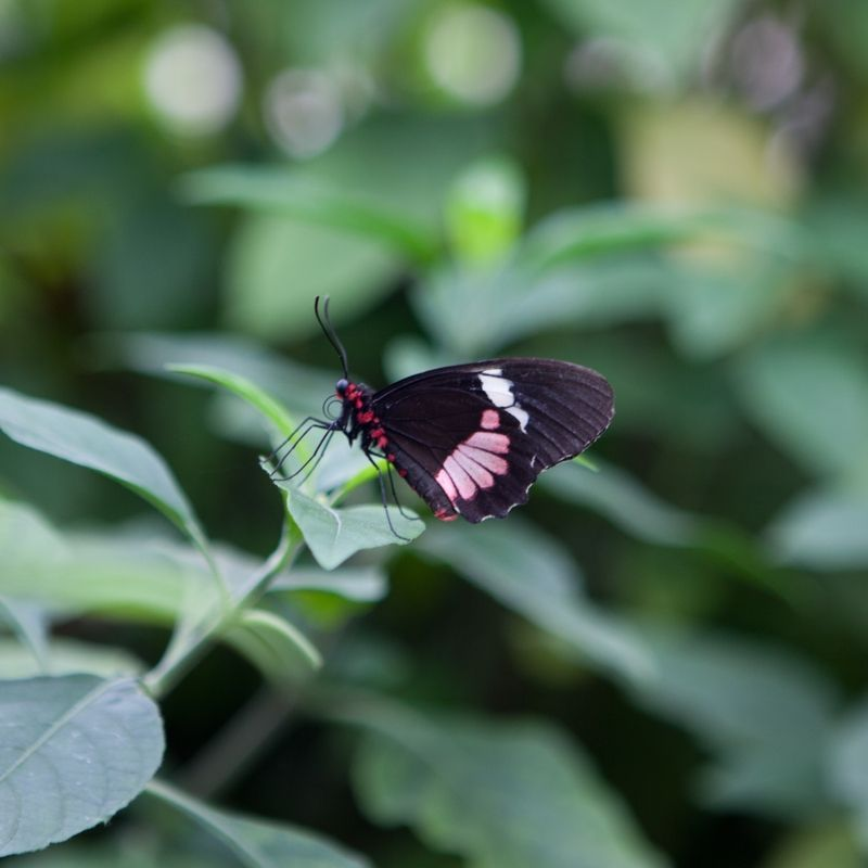 A photo of a butterfly on a leaf