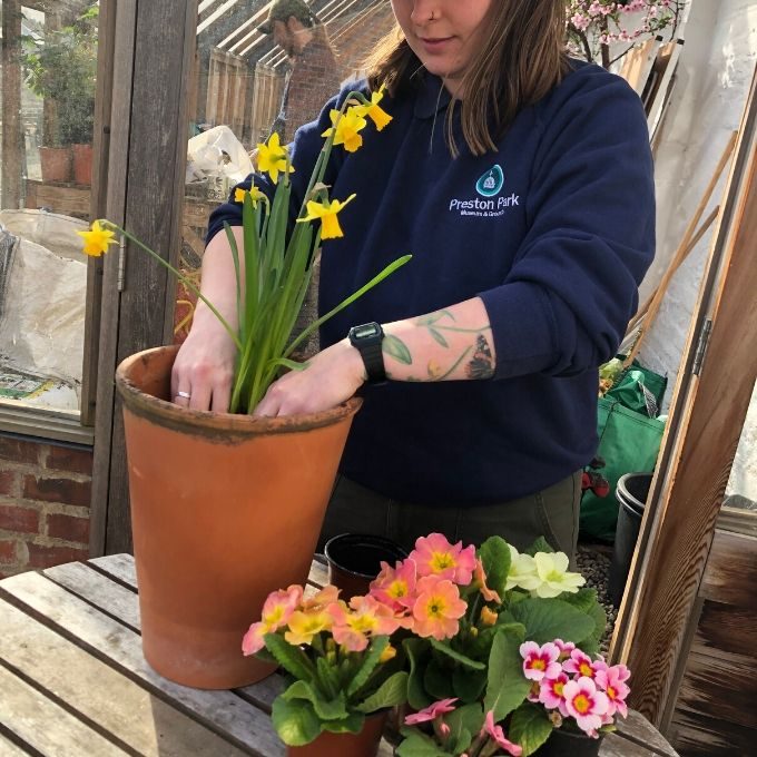 Arranging Your Plants In A Pot