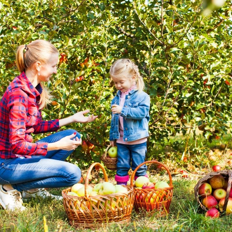 Apple Picking Featured
