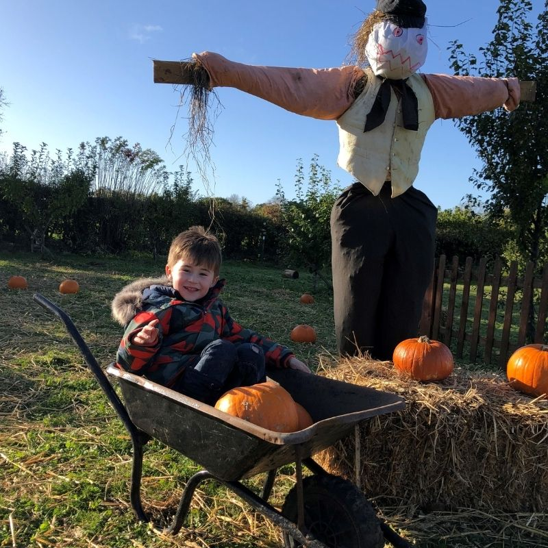 Pick Your Own Pumpkin At Preston Park