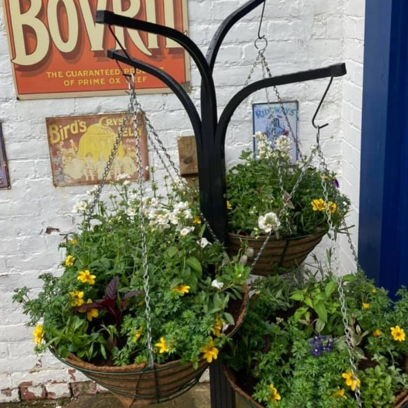 Home Grown Hanging Baskets For Sale From The Walled Garden At Preston Park Museum